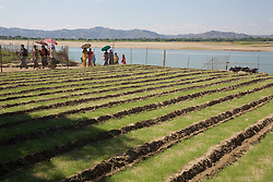Tilled Fields Along The Ayeyarwady River