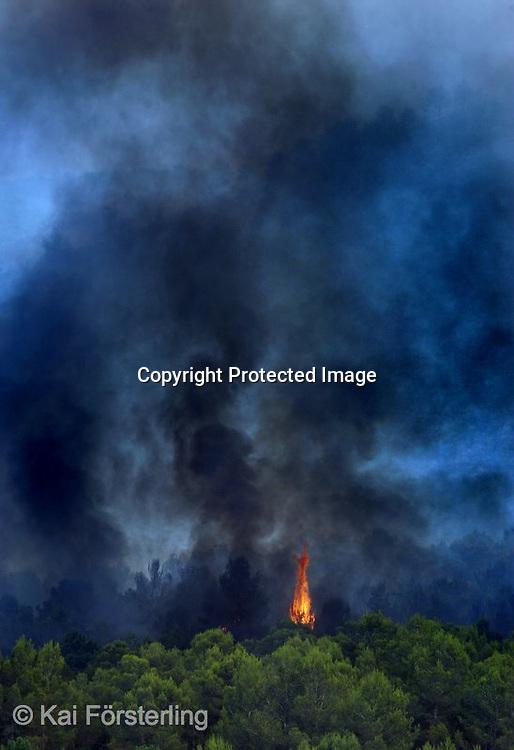 Valencia, 22/06/05. Una llama emerge entre los pinos en el incendio forestal que se originó anoche en Jativa.