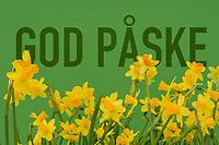 Grønn, norsk tekst 'god påske' på grønn bakgrunn med gule påskelijer.
