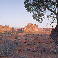 Twisted juniper tree overlooks the Organ and the Three Gossips.