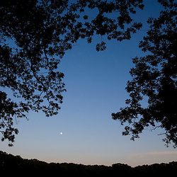 Moon and oak trees in Grafton, Massachusetts.  Worcester County.