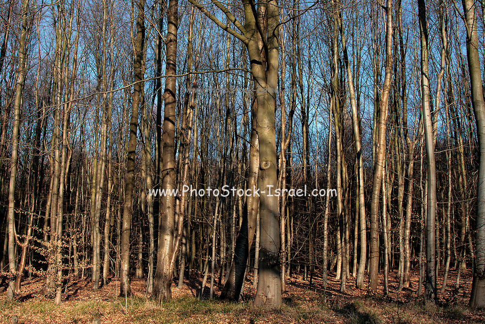 Dense forest. Photographed in Belgium