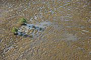 Mud patterns on beach<br /> GUYANA<br /> South America