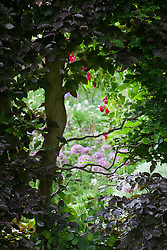View through hedge