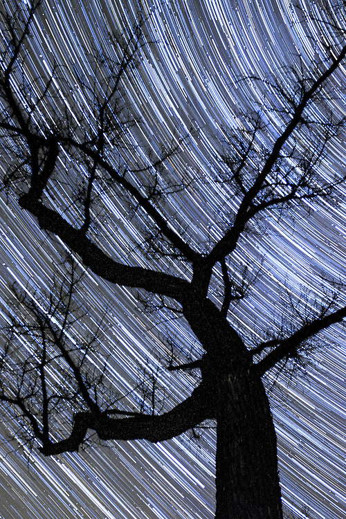 Star trails while camping are so fun.