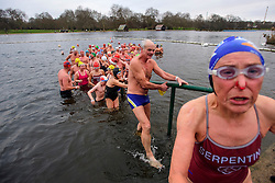 © Licensed to London News Pictures. 25/12/2016. London, UK. Swimmers leave the water after the race. Members of the Serpentine Swimming Club brave the cold waters at the Serpentine Lake in Hyde Park, London to compete for the traditional Peter Pan Cup on Christmas Day, December 25, 2016. Photo credit: Ben Cawthra/LNP
