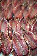 Fresh Anchovies - Venice Rialto Fish Market