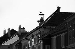 THEMENBILD - Die Freistadt Rust am Neusiedlersee wird auch Hauptstadt der Stoerche genannt. Der Weissstorch (Ciconia ciconia) zaehlt zu den groessten Landvoegeln Europas. Das Federkleid ist bis auf die schwarzen Schwungfedern rein weiss. Schnabel und Staender sind rot. Hier im Bild Storchennester auf den Rauchfaengen ueber der Stadt. Aufgenommen am 19.05.2013 in Rust. // THEMES IMAGE - The town of Rust on Lake Neusiedl is also called the capital of the storks. The White Stork (Ciconia ciconia) counts the largest land birds in Europe. The plumage is pure white except for the black wing feathers, beak and uprights are red. This image shows Stork nests on the chimneys above the city. Pictured in Rust, austria on 2013/05/19. EXPA Pictures © 2013, PhotoCredit: EXPA/ Johann Groder
