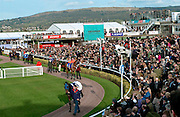 A general view of the horse racing scene at Cheltenham Festival.  Horses are being walked in the unsaddling enclosure.
