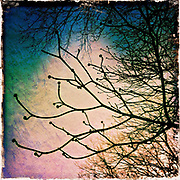 iPhoneography Washington DC<br /> iPhone Images Washington DC<br /> iPhone Photos Washington DC<br /> Washington DC Photography<br /> Randy Santos<br /> <br /> <br /> All Images Shot and Processed with iPhone Camera and Various iPhone Photo Editing Apps<br /> <br /> Washington DC Photography / Washington DC Photographs / Framed Prints Washington DC Photos / Wall Art / Framed Photographs / Prints for Sale / Washington DC Images / Wall Murals / Images Printed to Metal / Canvas / Acrylic / Wood<br /> <br /> Exceptional Quality Fine Art Photography Prints Washington DC / High-Res Images for Interior Decor Projects / Art for Corporate Decor / Hospitality Decor / Health Care Decor / Interior Design Projects requiring Art of Washington DC<br /> <br /> High Quality Photographs and Custom Fine Art Prints of Washington DC Monuments Landmarks Architecture