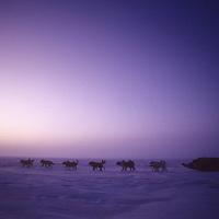 Dog sled team mushes on Arctic Ocean.