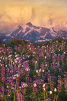Summer thunderstorm over Mount Shuksan at sunset, seen from wildflower meadows on Skyline Divide, Mount Baker Wilderness Washington