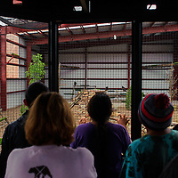 Zoo visitors pack into the observation platform to see golden eagles in their new aviary during the grand opening of the new enclosure Friday at the Navajo Nation Zoo in Window Rock.