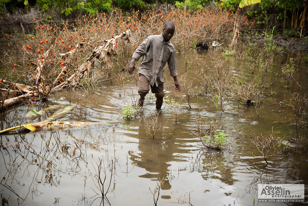 Irene Sossou, 29, walks through his destroyed tomato plot near his home in the village of Agniwedji, Benin  on Monday October 25, 2010.