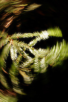4 August 2006: Spinning art of fern leaf during a hike along Highway 1 through central California along the coast of Big Sur. Graphic, art, texture, book, green, black.