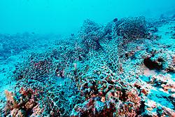 abandoned fishing net over coral reef, .Kona, Hawaii (Pacific).