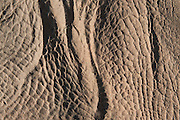 Rhino skin detail in sand<br /> Marataba, A section of the National Park<br />  Province<br /> SOUTH AFRICA