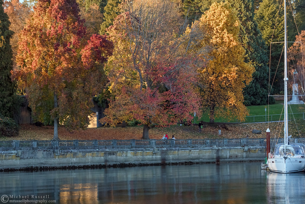 Fall foliage colors on various trees along the Stanley Park Seawall at the west end of Coal Harbour, next to the Vancouver Rowing Club building.  Photographed from Devonian Harbour Park in Vancouver, British Columbia, Canada.