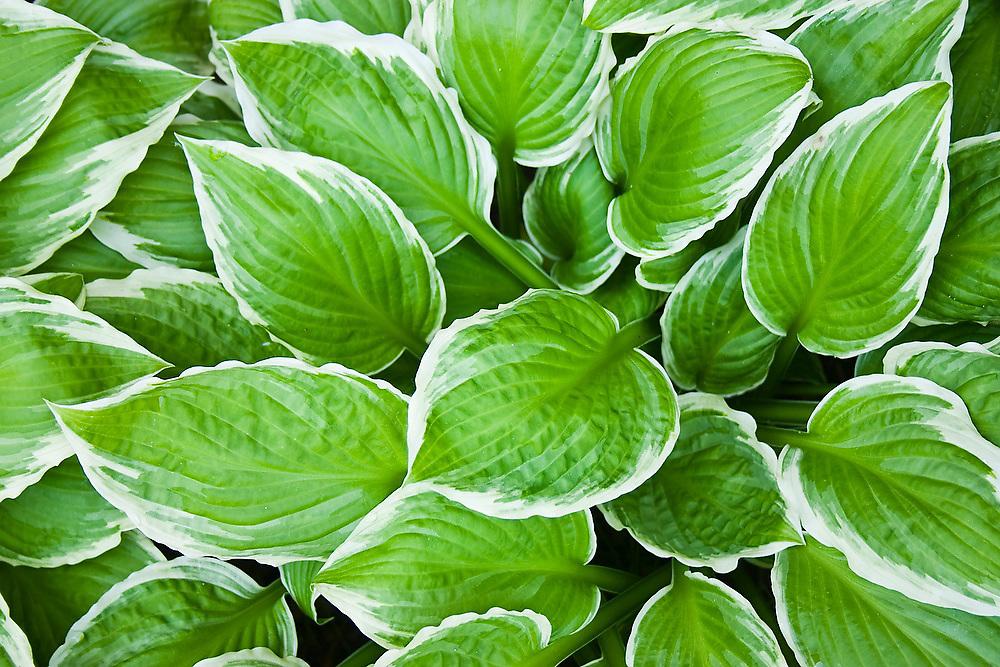 Lush green ground cover grows on the University of Washington campus in Seattle, Washington.