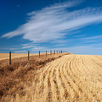 Cirrus clouds hover above harvested wheat fields in Montana's Gallatin Valley.