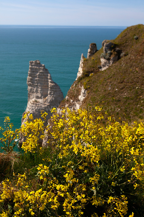 The Needle - L'Aiguille - Etretat, Normandy, France