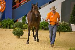 Olivier Van Den Berg, (NED), Mr Mystic Nic - Horse Inspection Reining  - Alltech FEI World Equestrian Games™ 2014 - Normandy, France.<br /> © Hippo Foto Team - Dirk Caremans<br /> 25/06/14