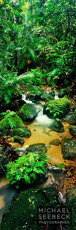 A vertical panoramic photograph of a small rainforest stream in the Wet Tropics, near Mt Bartle Frere.<br /> <br /> Limited Edition of 95