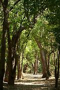 Semi-arid forest, walkway through trees, Berenty National Park, Madagascar