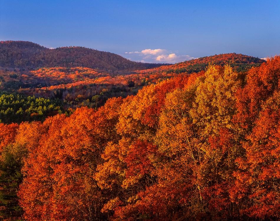 Late fall color, hardwood trees, oak, birch beech, pm light, New Hampton, NH