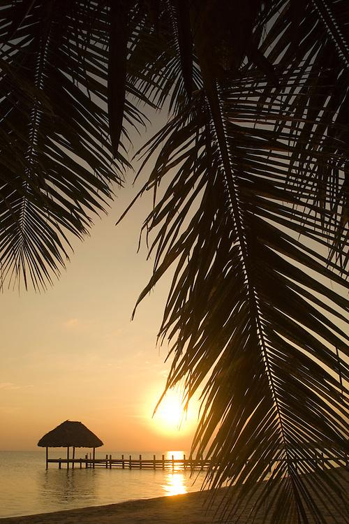 Central America, Belize,  Stann Creek District,  Hopkins, Jaguar Reef Lodge, sunrise on beach  through palm fronds  PR