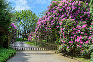 Driveway & Rhododendron, Further Lane, East Hampton, NY