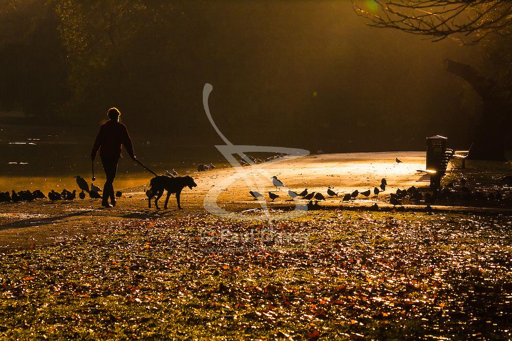 Regent's Park, London, November 4th 2014. A dog walker enjoys the morning sunshine in Regent's Park.