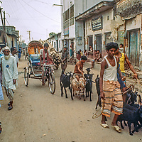 Young men leads goats through other human-powered traffic in the streets of  Dhaka, Bangladesh in 1977.
