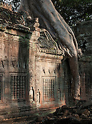 A large tree grows through a temple at Angkor, Siem Reap Province, Cambodia