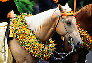 Horse Parade, lei, Hawaii