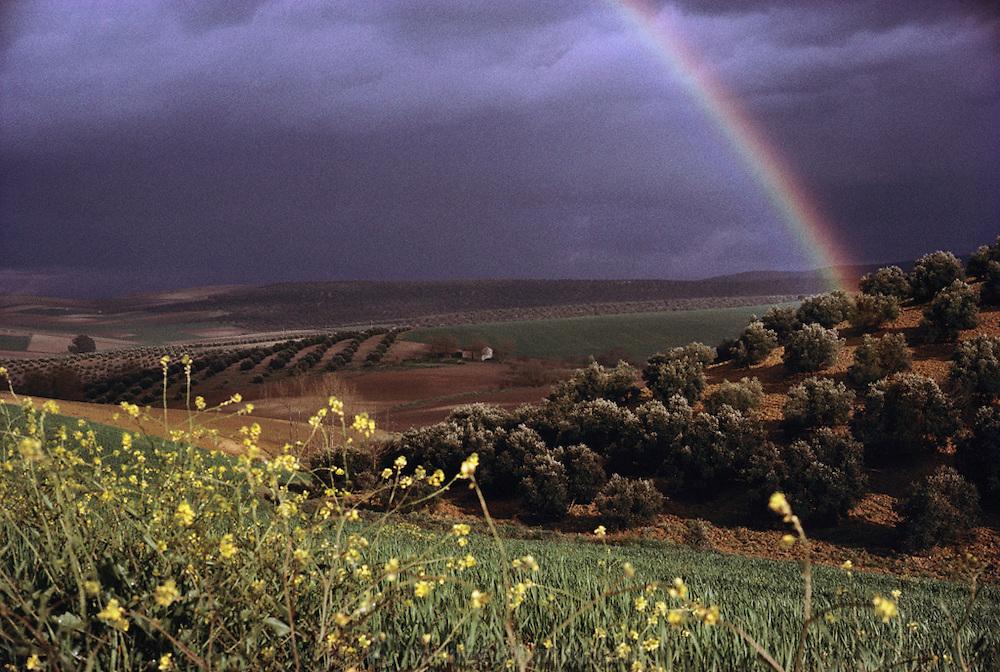 Rainbow over olive orchards near Cordoba, Spain.