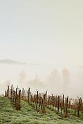 Pesticide Free Farming on Ribbon Ridge AVA