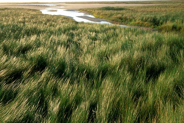 Texas Bay Grassy Wetlands