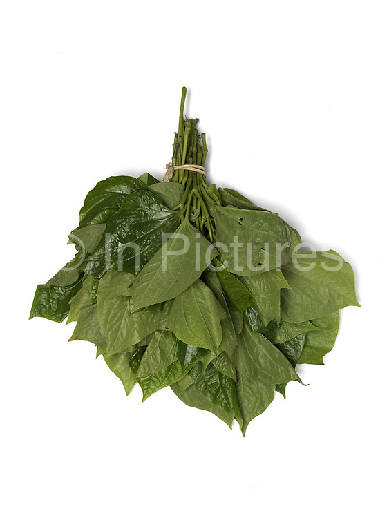 'Pak Elerd', a green leafy vegetable for sale at the roadside market in the Tai Dam village of Ban Na Mor, Oudomxay province, Lao PDR. In the past the bulk of products collected or caught from the wild were used for family consumption, but nowadays a substantial proportion of products are sold in the markets for cash. Ban Na Mor market is ideally situated on route 13 which goes to the border with China allowing them to take advantage of the many Chinese tour buses and businessmen passing through.