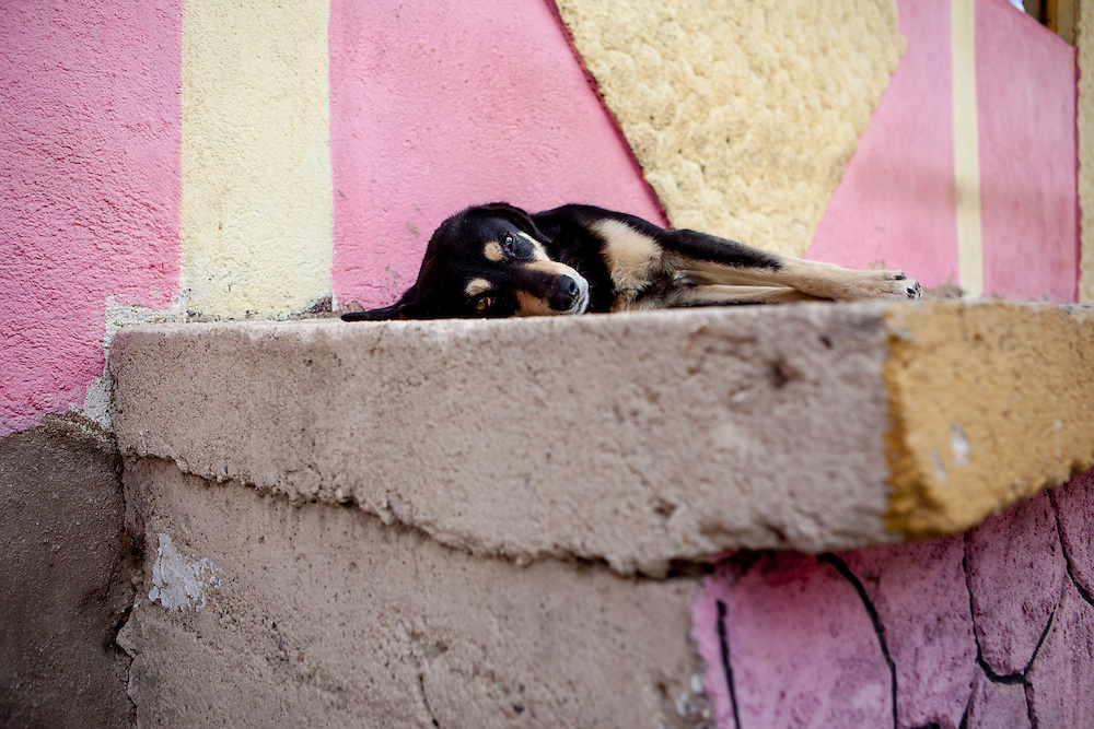 A dog sunbathing in front of the house of one clients family during door to door activity in Delcevo. They visit families, deliver brochures and putting up posters in the community to inform about health related issues and patients rights.