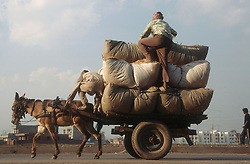 Horse pulling a cart laden with two men and large sacks; in India,