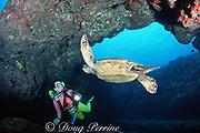 "diver encounters green sea turtle, Chelonia mydas ( Threatened Species ) at ""The Caverns"", aka Sheraton Caverns, Poipu, Kauai, Hawaii, USA MR 290"
