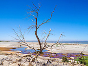 Dead Trees at Salton Sea