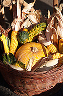 Traditional Hungarian Harvest Festival vegetales displayed  in a basket .<br /> <br /> Visit our HUNGARY HISTORIC PLACES PHOTO COLLECTIONS for more photos to download or buy as wall art prints https://funkystock.photoshelter.com/gallery-collection/Pictures-Images-of-Hungary-Photos-of-Hungarian-Historic-Landmark-Sites/C0000Te8AnPgxjRg