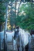 Horses at Estancia Huechahue, Patagonia, Argentina, South America
