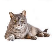 20140723 Kris Cats