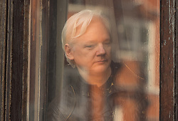 Julian Assange prepares to speak to the media from the balcony of the Ecuadorian embassy in London after a seven-year investigation in Sweden against the WikiLeaks founder was suddenly dropped.