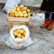 A Romanian peasant farmer selling apples from her orchard at Ocna Sugatag market, Maramures, Romania