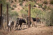 Ranch Life Gallery