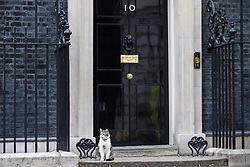 © Licensed to London News Pictures. 08/06/2017. London, UK. LARRY the cat sits on the doorstep of No 10 Downing Street as Britain heads to the polls to elect a new Prime Minister in the 2017 General Election. Photo credit: Rob Pinney/LNP